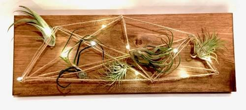 A Wood Board String Art with Fairy Lights and Air Plants plant nite project by Yaymaker