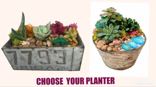 A Choose Your Planter  License Plate or Birch plant nite project by Yaymaker
