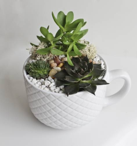 A Cup of Love Succulent Garden plant nite project by Yaymaker