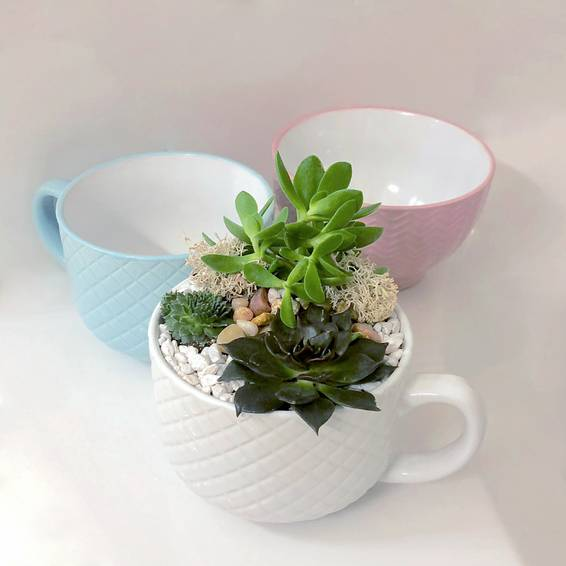 A Pick Your Cup of Love Succulent Garden plant nite project by Yaymaker
