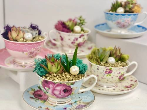 A Terrarium Teacup Party choose two tea cups plant nite project by Yaymaker