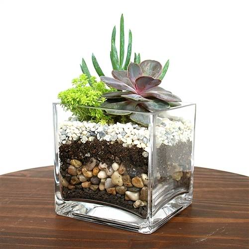 A Cube Layered Stone Terrarium plant nite project by Yaymaker