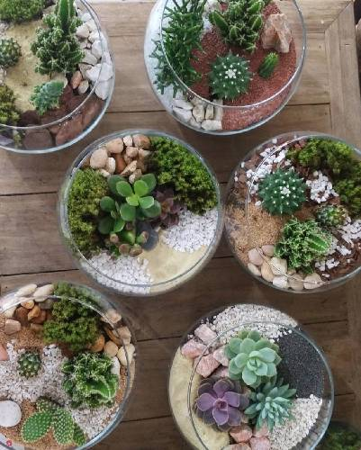A Glass Succulent Bowls  Create One plant nite project by Yaymaker