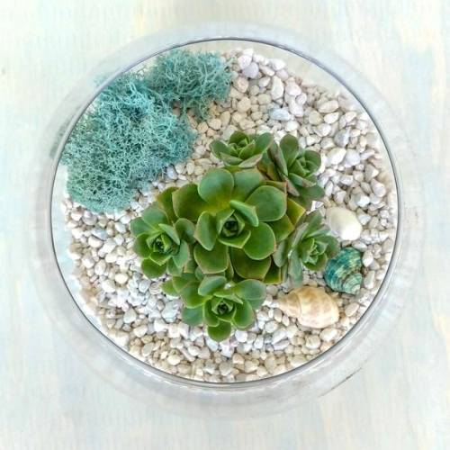 A Glass Succulent Terrarium II plant nite project by Yaymaker