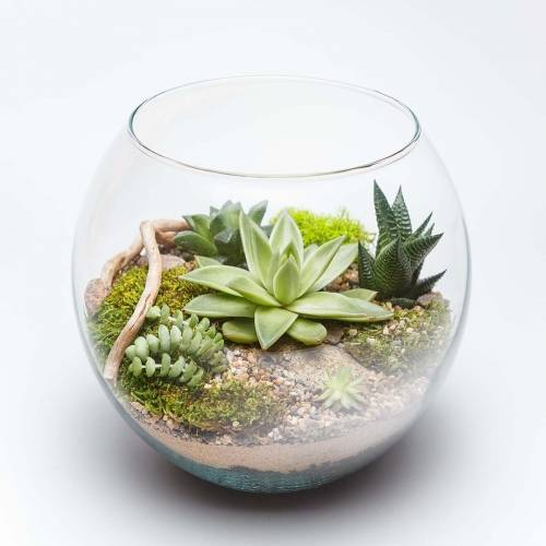 A Glass Succulent Terrarium III plant nite project by Yaymaker