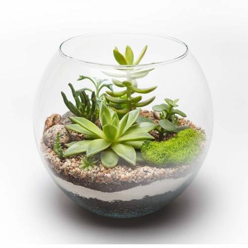 A Glass Succulent Terrarium V plant nite project by Yaymaker