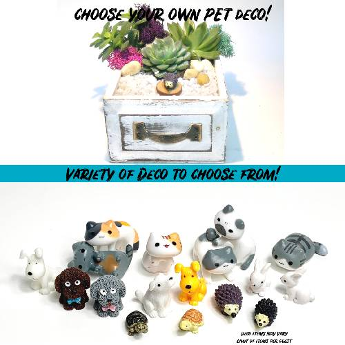 A Choose your Deco Drawer  Pets plant nite project by Yaymaker