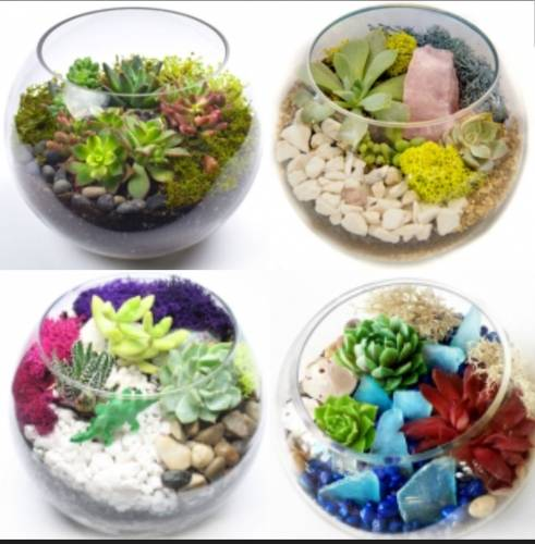 A Pick Your Design Succulent Garden plant nite project by Yaymaker