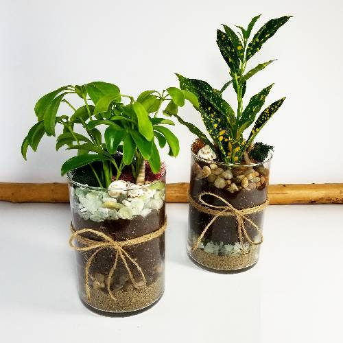 A Tropical Layer Planters x2 plant nite project by Yaymaker