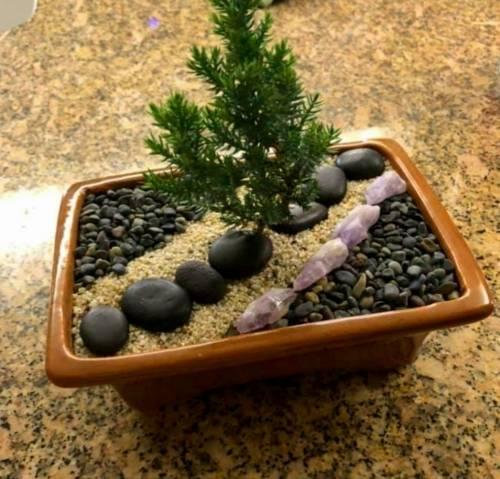A BONSAI TREE II  Juniper Bonsai Tree for Beginners plant nite project by Yaymaker