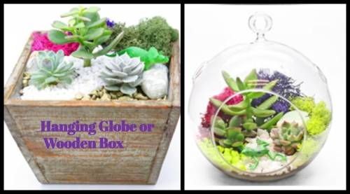 A Hanging Globe or Box plant nite project by Yaymaker