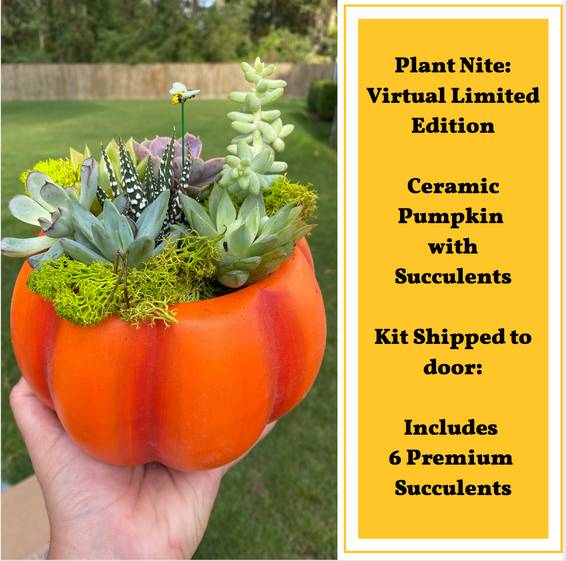 A Limited Edition Virtual Ceramic Pumpkin Succulent Garden Supplies Shipped experience project by Yaymaker