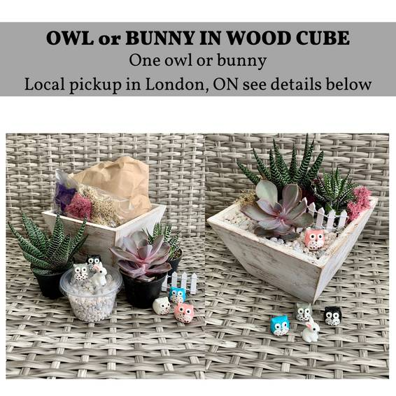 A DIY Wood Cube Planter Kit London ON Pickup experience project by Yaymaker