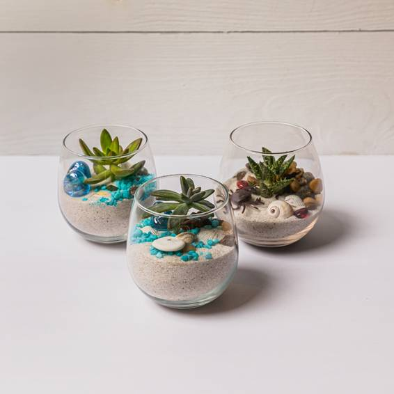 A Wine Glasses Succulent Trio II experience project by Yaymaker