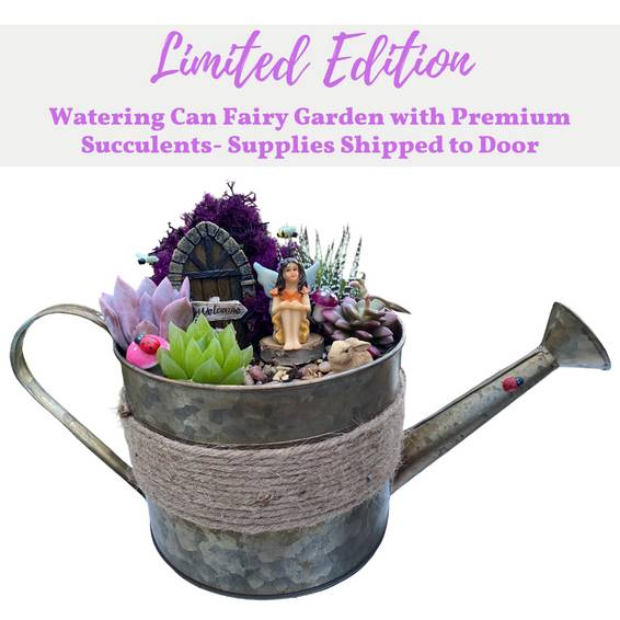 A Limited Edition Watering Can Fairy Garden 4 Succulents  Supplies Shipped to Door experience project by Yaymaker