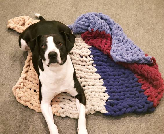 A Doggie chunky blanket workshop experience project by Yaymaker