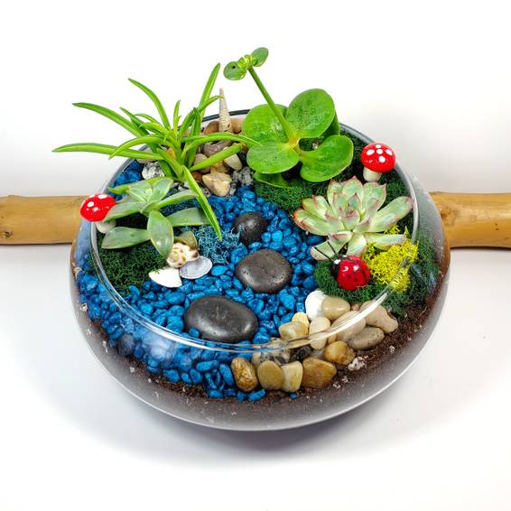 A Lily Bowl Creek Succulent Garden experience project by Yaymaker
