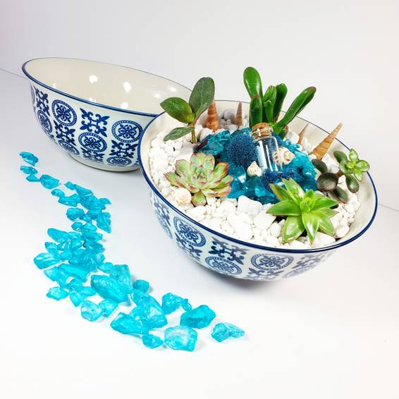 A China Bowl Garden x5 Succulents experience project by Yaymaker
