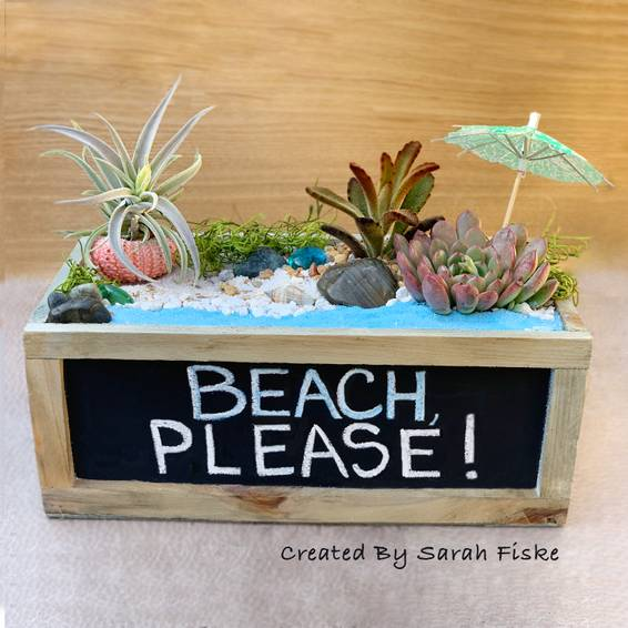 A Succulent Beach with urchin air plant experience project by Yaymaker