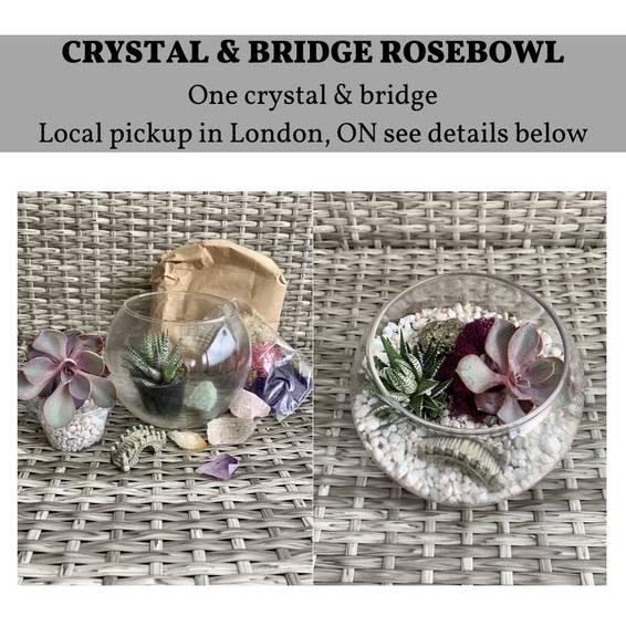 A DIY Rosebowl Planter Kit London ON Pickup experience project by Yaymaker