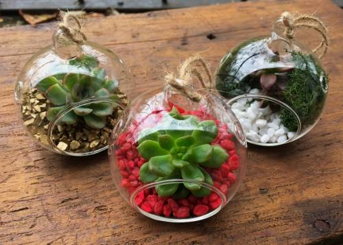 A Holiday Succulent Ornaments  Set of 3 experience project by Yaymaker