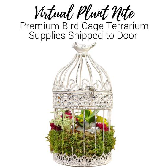 A Virtual Plant Nite Premium Bird Cage Terrarium Supplies Shipped to Door experience project by Yaymaker