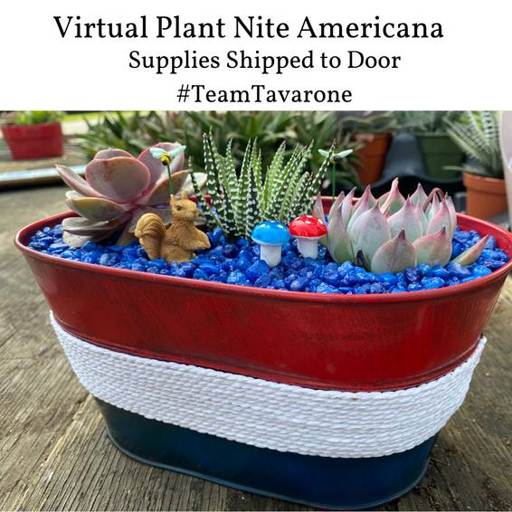 A Americana Succulent Planter Supplies Shipped to Door experience project by Yaymaker
