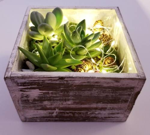 A Playful Winter Fairy Lights and Succulents in Wooden Planter experience project by Yaymaker