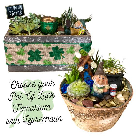 A Choose your Pot of Luck Terrarium with Leprechaun experience project by Yaymaker