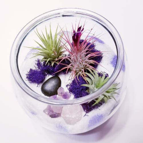 A Royal Purple Air Plant Terrarium with Crystals experience project by Yaymaker