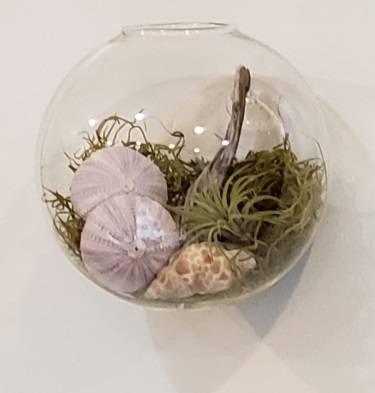 A Wall Mount Glass Seascape with Air Plants and Shells experience project by Yaymaker
