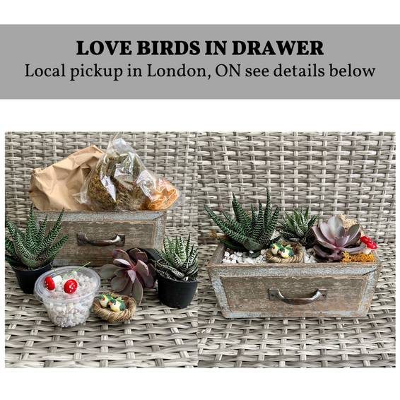 A DIY Drawer Planter Kit London ON Pickup experience project by Yaymaker