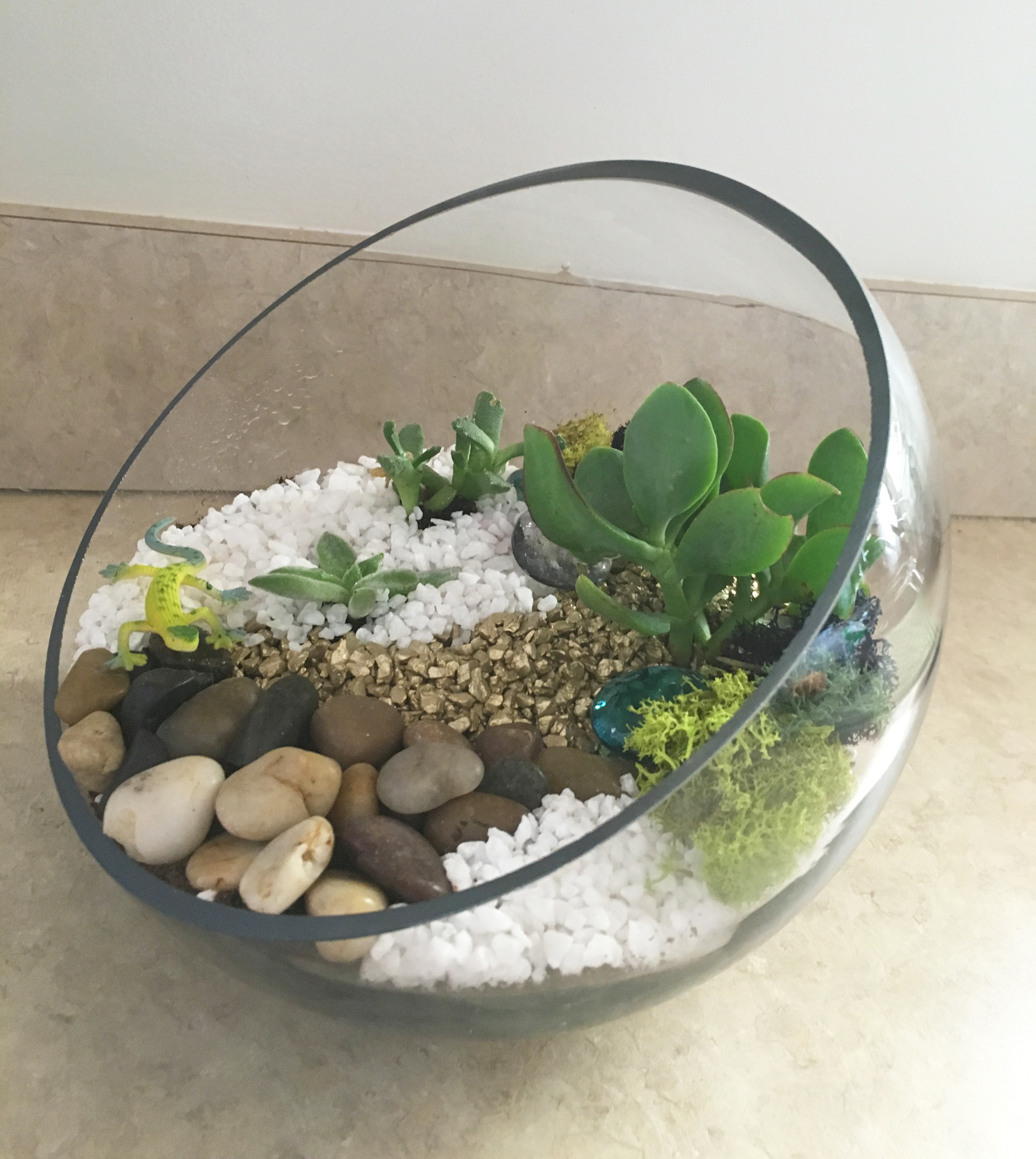A Succulent Terrarium in 8quot Sloped Glass Bowl plant nite project by Yaymaker