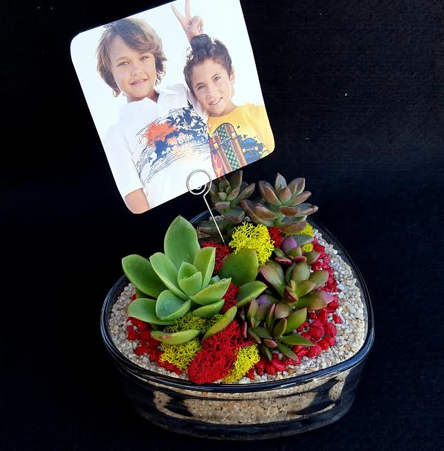 A Sweetheart Succulent Garden with Picture Display plant nite project by Yaymaker
