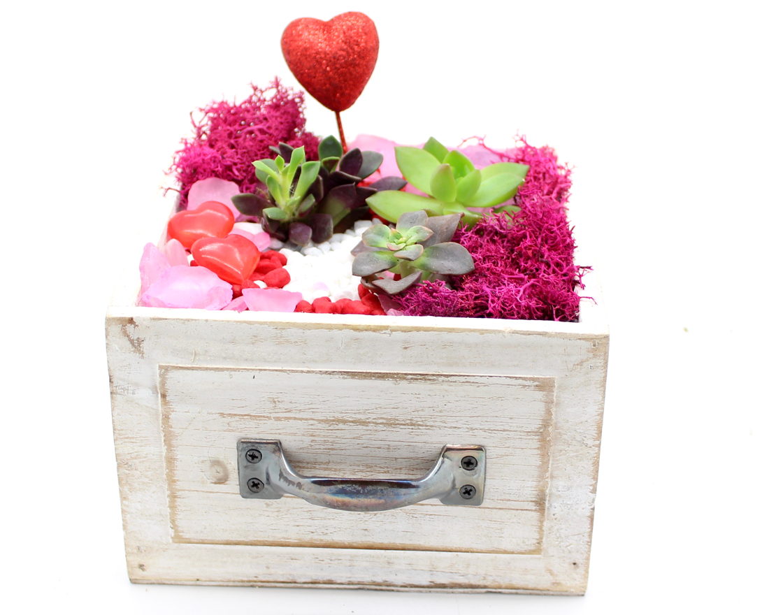 A Heart  Valentines  Succulents in White Square Drawer plant nite project by Yaymaker