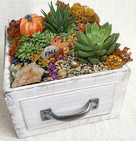 A Fall Drawer of Succulents plant nite project by Yaymaker