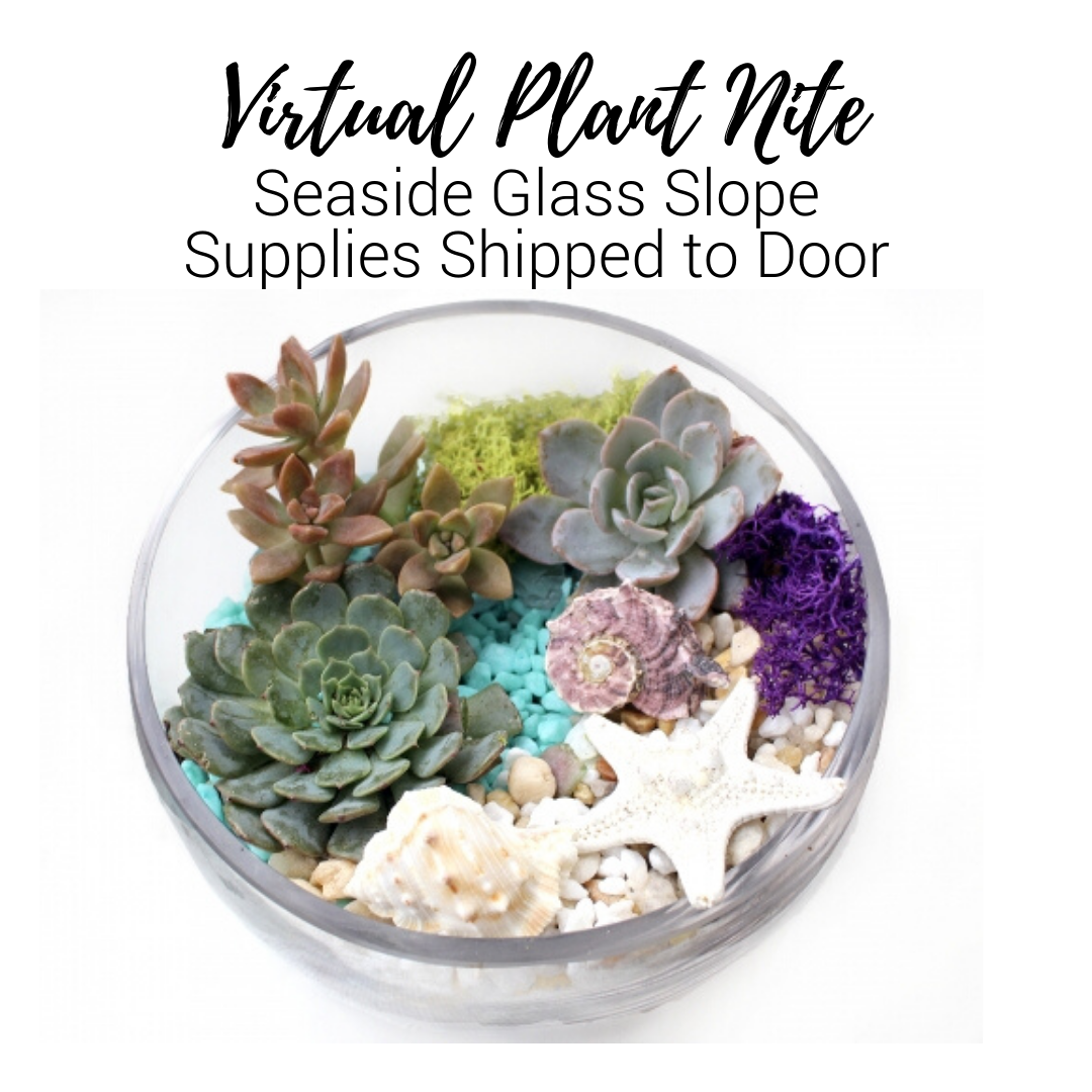 A Virtual Plant Nite Seaside Glass Slope Supplies Shipped to Door experience project by Yaymaker