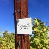 A photo of a Yaymaker Venue called Capitello Wines located in Eugene, OR